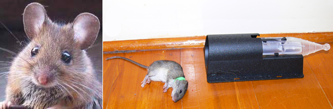 tous les avis donnés par tout le monde partout sur la séduction d'un homme : exemple Mouse-trap-1